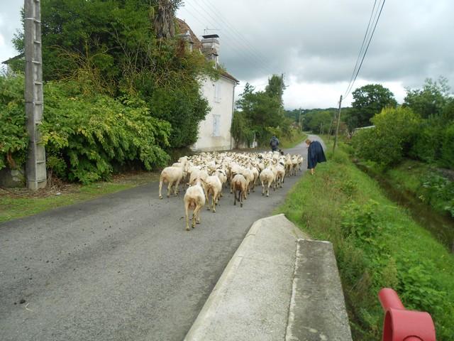 Chemin de Compostelle - en Pays basque