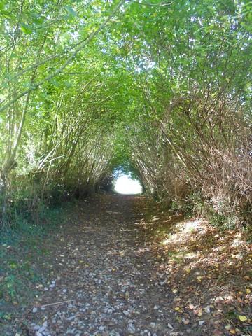 Chemin de Compostelle - sous couvert de verdure