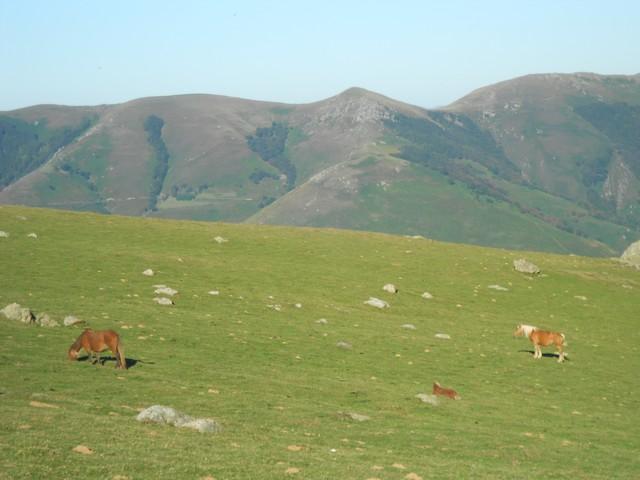 Chemin de Compostelle - au milieu des troupeaux de moutons et chevaux