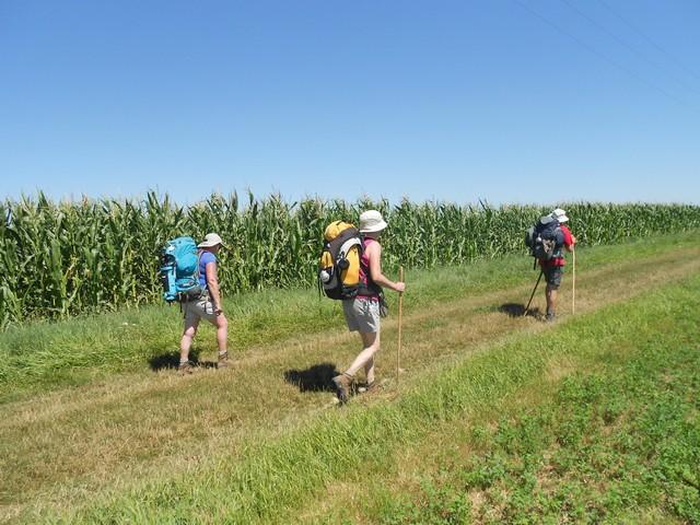 Chemin de Compostelle - Au milieu des maïs